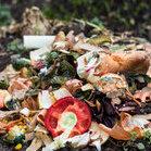 Lebensmittelrettung: Essen gehört nicht in den Müll