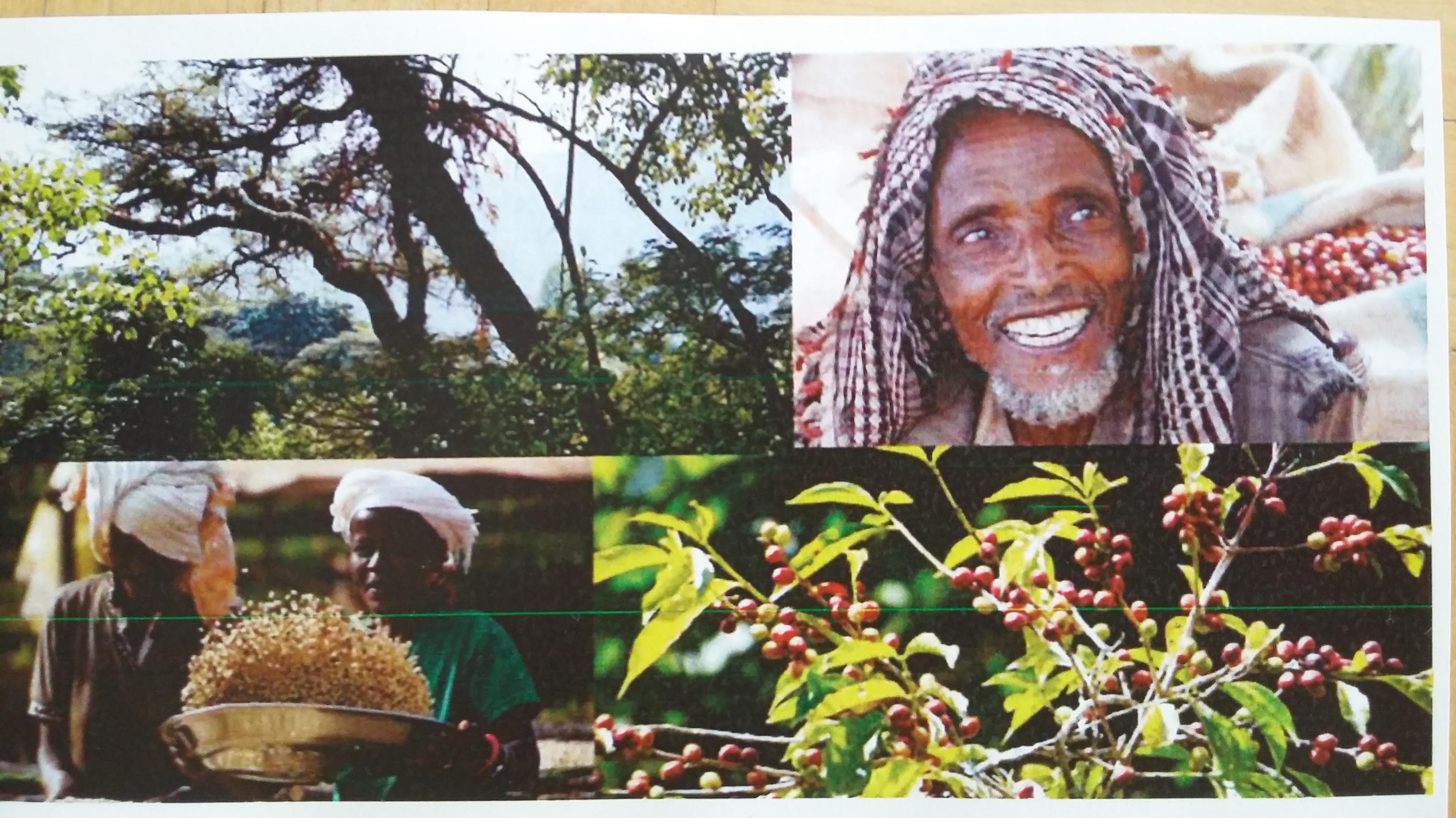 Kaffeereise nach Aethiopien