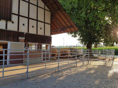 Noch ein Platz im Barhuf Offenstall in 3629 Kiesn