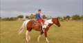 Absolut schicker Paint Horse Wallach Allrounder