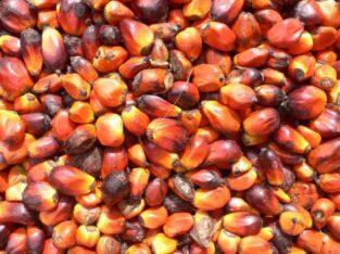 rohes und raffiniertes Palmöl